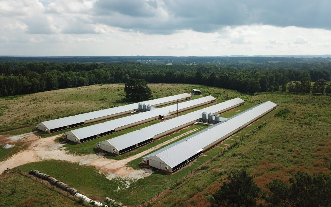 Thomas Poultry-101+/- Acre Cattle and Poultry Farm