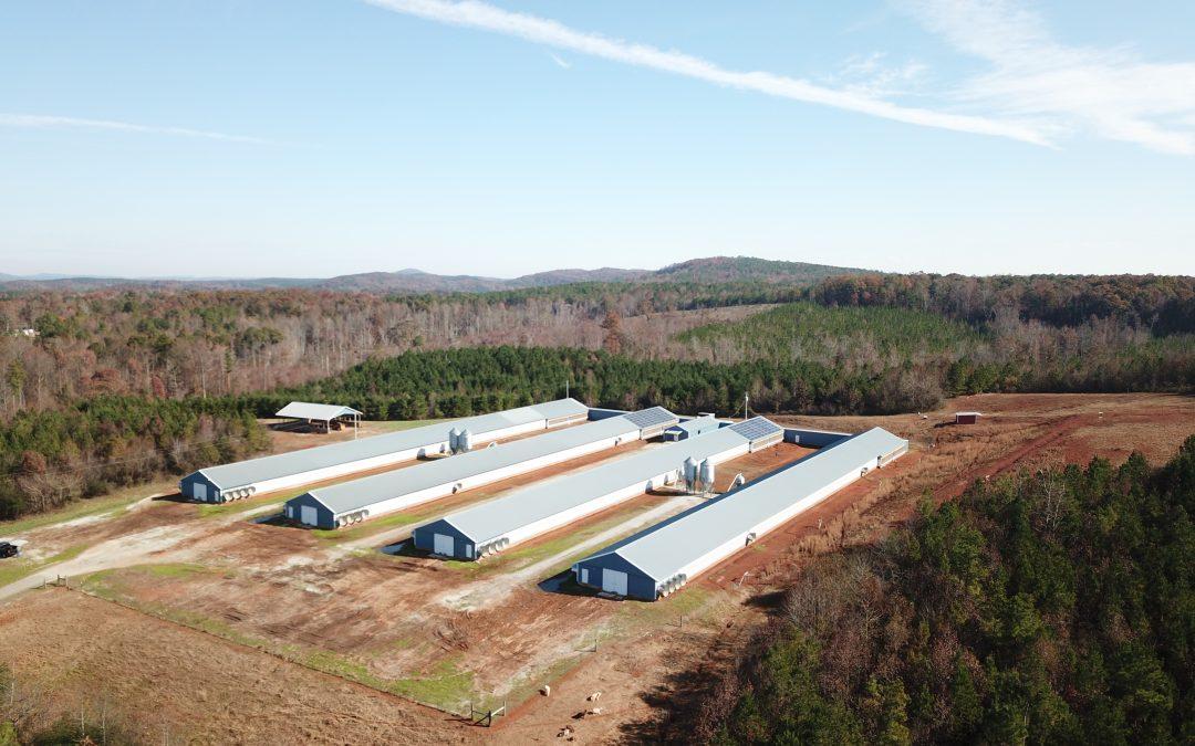 Buckeye Farm-Four House Breeder Hen Farm in Clay County, AL