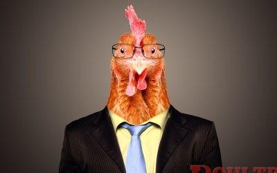 Chickens In Vogue